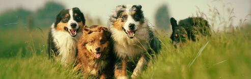 Como tratar bem os cães