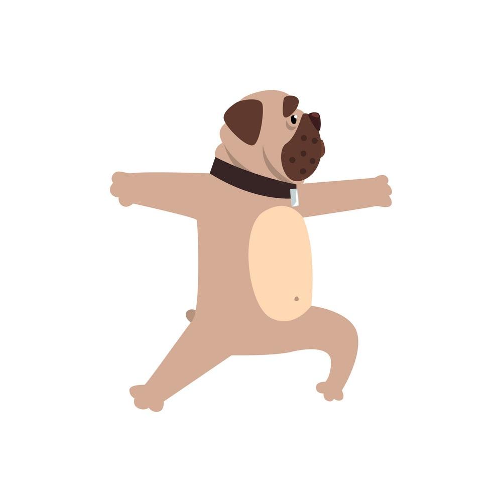 cachorro se exercitando